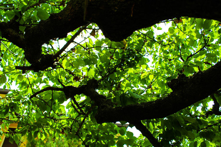 Beauty In Nature Green Color Growth Leaf Nature Tree
