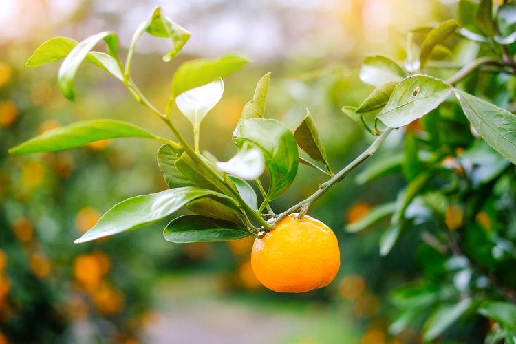 Orange in the