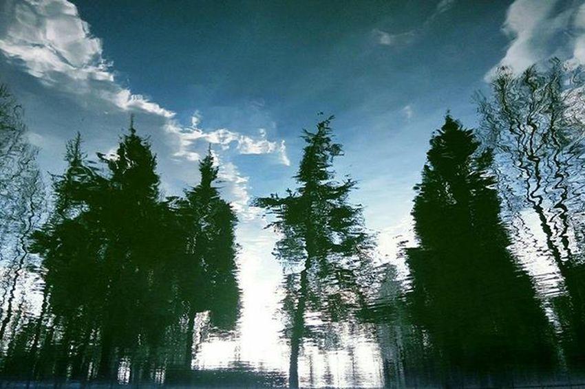 Photography Photo Meizu Photooftheday Anadolu Sky Clouds Trees Nature Reflection