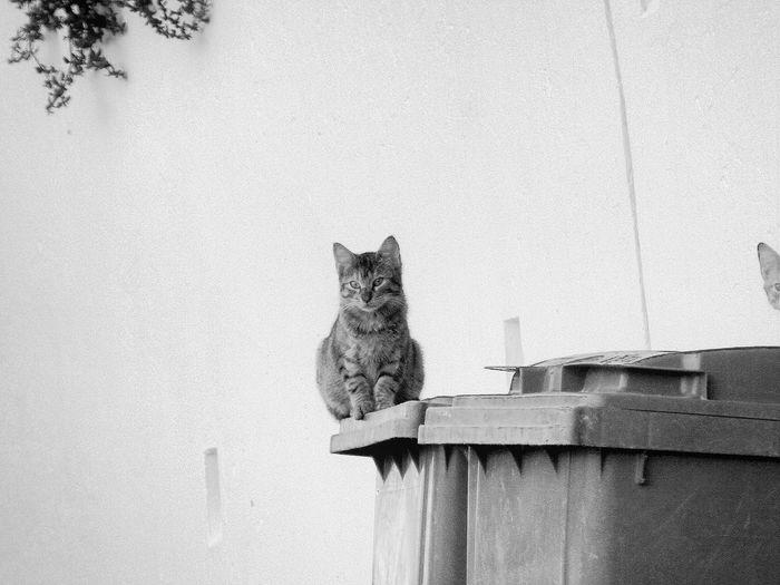 Cat Sitting On Garbage Bin