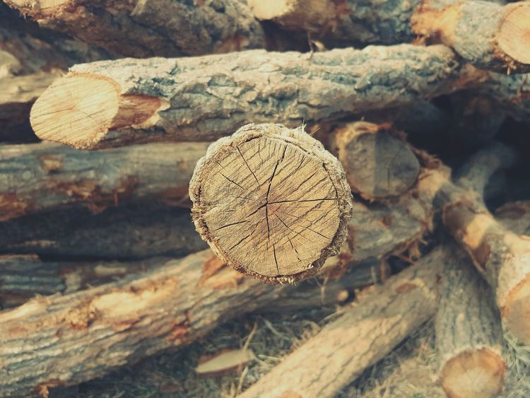 Hi Nature Log Wood - Material Deforestation Timber Tree Ring Close-up Lumber Industry Woodpile Outdoors No People Day