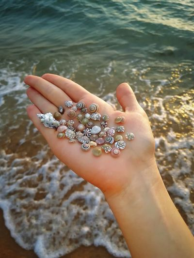 Cropped hand of woman holding seashells at beach