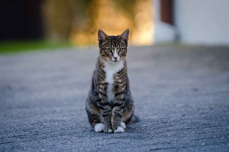life is crazy Animal Animal Photography Animal Portrait Animal Themes Cat Cats Close-up Constance Cute Cats Domestic Animals Domestic Cat Feline Focus On Foreground Kitten Lake Of Constance Germany Looking At Camera Mammal One Animal Outdoors Pets Portrait Sitting Sunrise Tiger Whisker