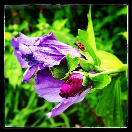 Fleurs du jardin ... Nature Flowers Flower