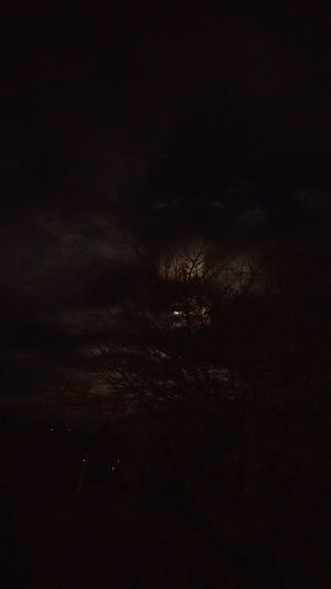 cloudy moonlit night Night Moonlight creepy moonlit night Creepy Clouds Tree Moon Clouds