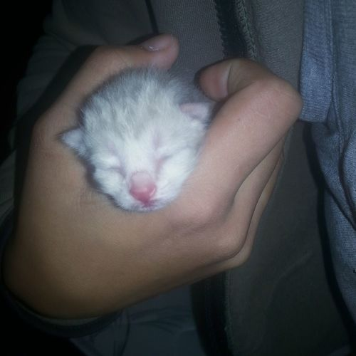 Um de seis 😍🐱🐾 ComoNaoAmar Cat Catlover Catlife Lovepet Pet Pet Photography