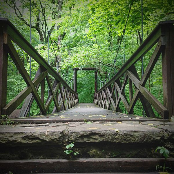 Railing Outdoors Nature Tree Day Lush Foliage Green Color Bridge - Man Made Structure Tranquil Scene Forest Tranquility Beauty In Nature Growth No People Footbridge