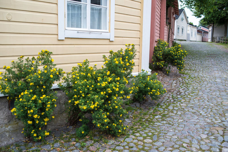 Path Perspective Plant Potentilla Street View Trees Blooming Building Exterior Bushes Cobbled Streets Country House Countryside Countryside Life Door Flower Medieval Outdoors Resedential Building Sky Street Town Windows Wooden Architecture Wooden House Yellow