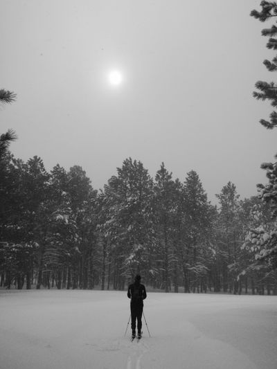 Rear View Of Person Skiing On Snowfield Against Trees