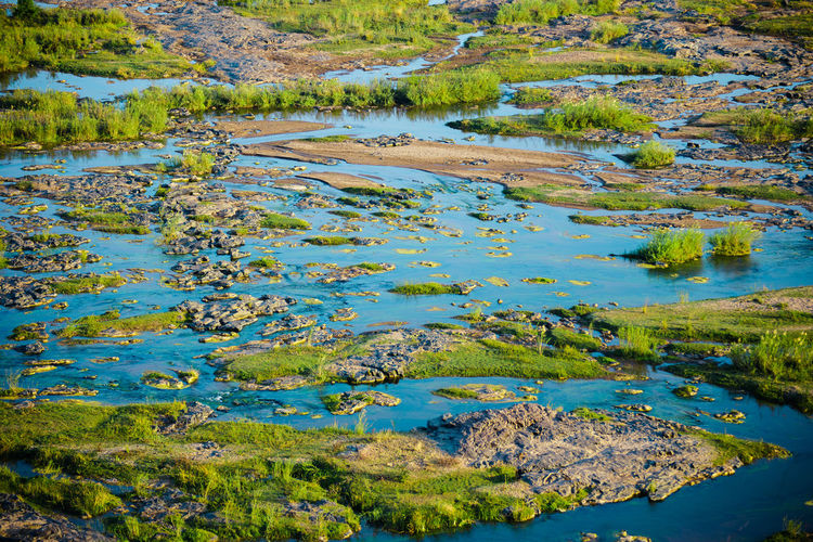 africa South Africa Nature Outdoors Summer Travel Destinations Wanderlust Beautiful Beauty In Nature Wetland Reed - Grass Family Crocodile Reptile Freshwater Bird Stream - Flowing Water Water Plant
