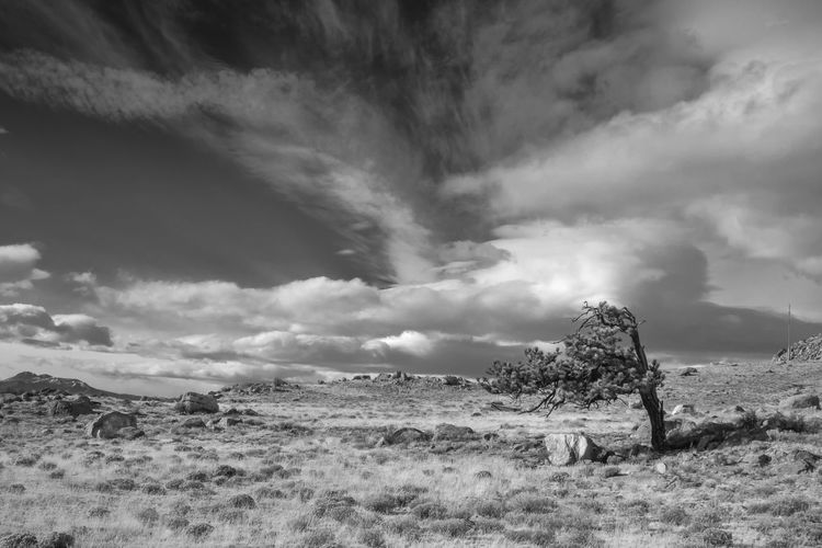 Landscape - Plain clouds and Tree Colorado High Plains South Park Tree B&w Beauty In Nature Black And White Cloud - Sky Clouds Day Landscape Mountain Nature No People Outdoors Pine Tree Scenics Sky Tranquil Scene Tranquility Tree Winter 2018