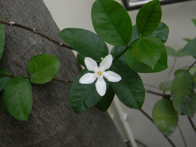 Day Flower No People Outdoors Plant