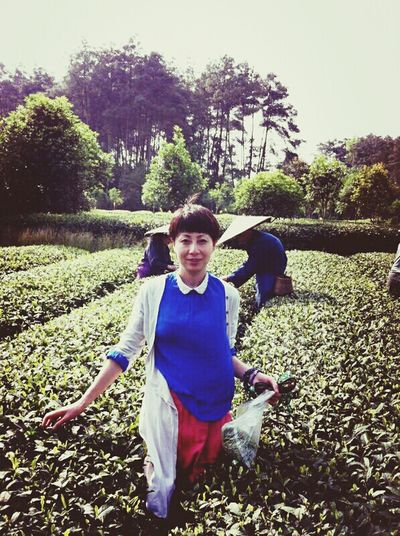 Picking Tea Tea Garden China Tea Garden Enjoying Life