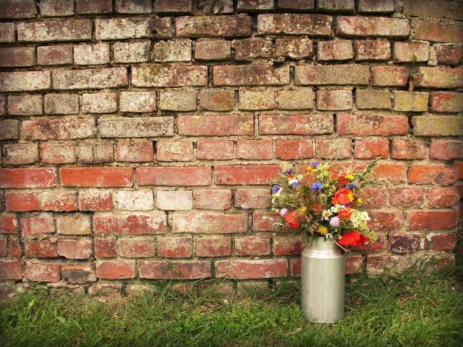 Beauty In Nature Brick Wall Close-up Day Flower Fragility Grass Green Green Color Growing Growth Milk Churn Nature No People Old Outdoors Pink Color Plant Red Vintage Wall Wall - Building Feature