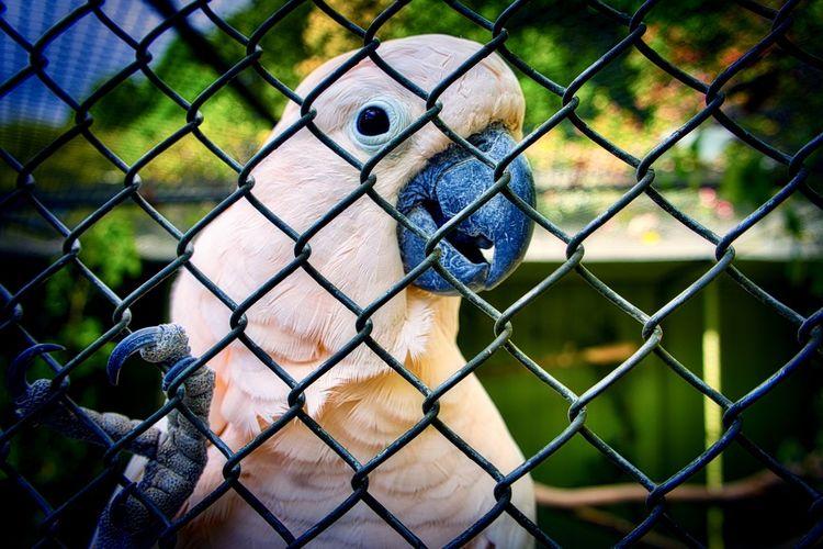 Happy Cockatoo