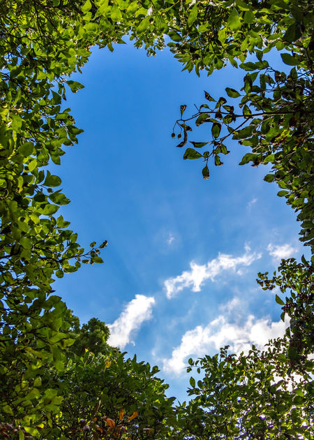 Spiral cloud and blue sky framed by trees Beauty In Nature Blue Blue Sky Branch Cloud - Sky Clouds And Sky Day Frame Green Color Growth Leaf Leaf Frame Low Angle View Nature No People Outdoors Plant Scenics Sky Tranquility Tree