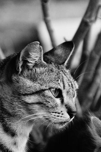 Cats Of EyeEm