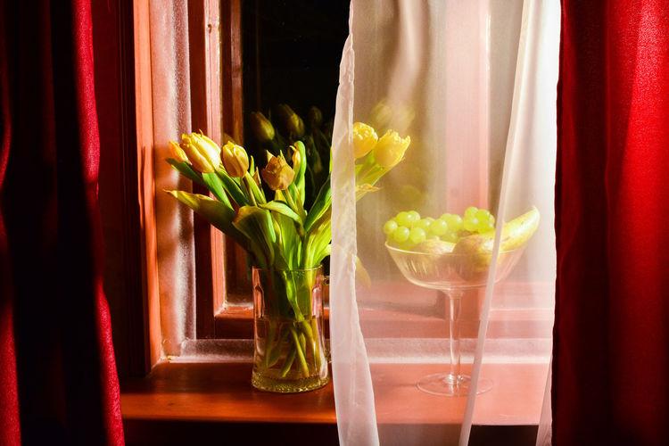 Landscape fliwers tulips on a windowsill