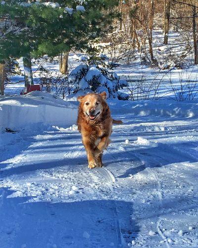 Dog walking on snow walking on field
