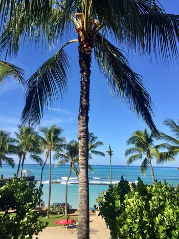 Waikiki Beach Palm Tree Tree Ocean Pacific Ocean View Beauty In Nature Blue Beach Growth Tranquil Scene Nature Sky Water Idyllic Tropical Climate Horizon Over Water Clear Sky One Person Outdoors Lost In The Landscape Island Of Oahu, Hawaii Second Acts Oahu Oahu / Hawaii An Eye For Travel The Great Outdoors - 2018 EyeEm Awards