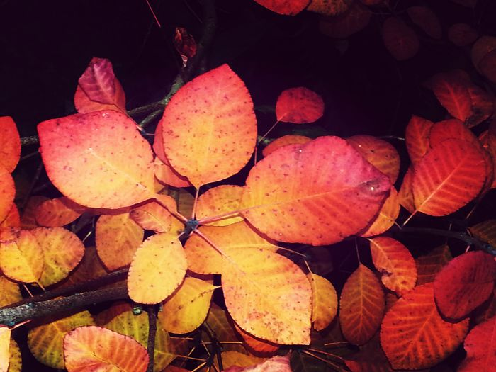 Red leaves. Autumn Colors KimberlyJTilley