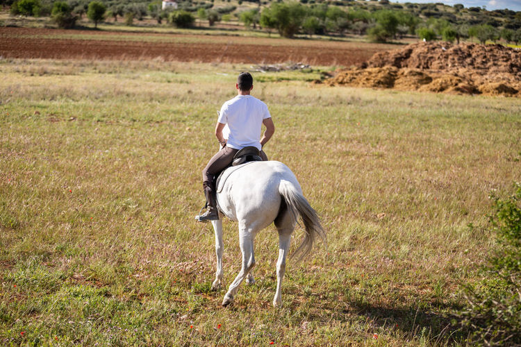Rear view of man riding horse on field