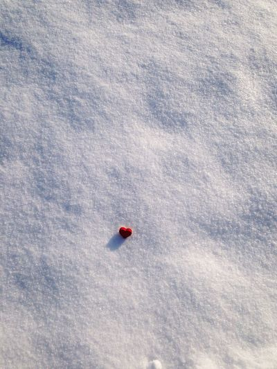 Red Snow Winter