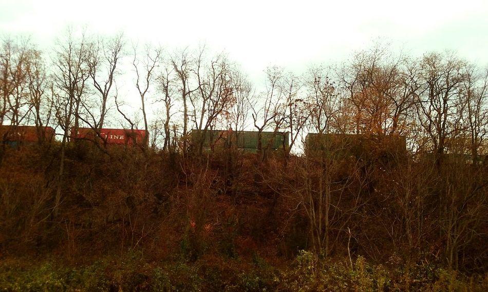 Train Fall Fall Colors