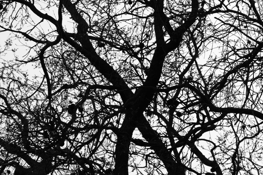 First Eyeem Photo Showcase March Trees And Sky Davis Branch Sillouette Nikond3300 Learn & Shoot: Balancing Elements