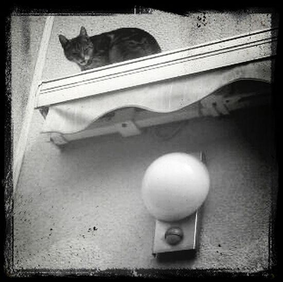 Cat on the awning...