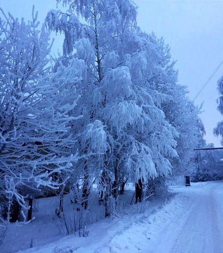 Зима в деревне Cold Temperature Winter Tree Plant Beauty In Nature Scenics - Nature