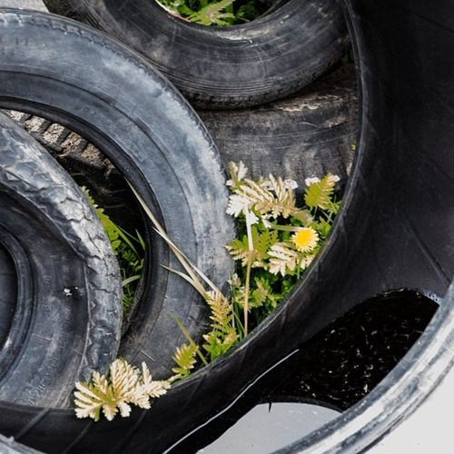 Almost invisible http://www.rhme.de/almost-invisible #nikon #d5200 #hidden #flower #abandoned #tire Flower Abandoned Hidden Nikon Tire D5200