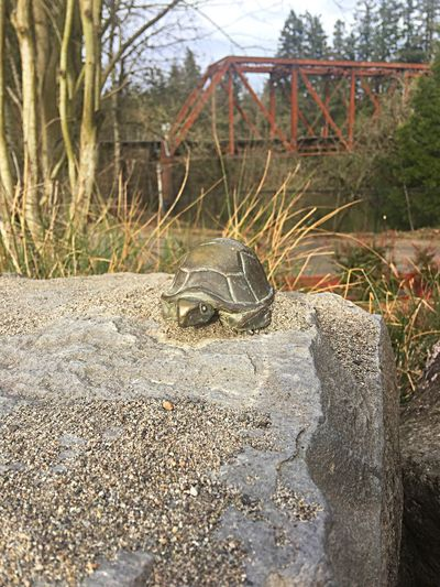 Cute Little Turtle Statue In A Beautiful Tualatin River Park - Animal Themes Outdoors Nature Sculpture No People Reptile Tree Plant Day Beauty In Nature Close-up Tortoise Portland