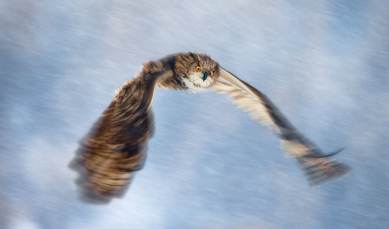 Close-Up Of Owl Flying Against Sky During Winter