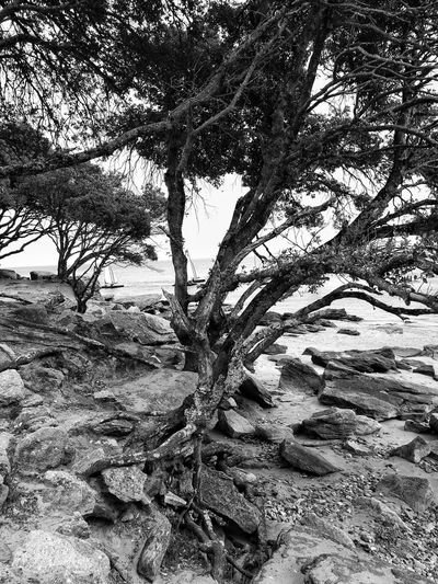 Tree Plage 🌴 Structure And Nature Structure Trunk Tree Nature Full Frame No People Sand Beauty In Nature Outdoors Nature Photography Noirmoutier Island Vendée France France🇫🇷 Noirmoutier-en-l'île HuaweiP9Photography Huawei P9 Leica Trunk Detail Plage Du Bois De La ChaiseMonochrome Photography Monochrome Black And White Black & White Black And White Photography
