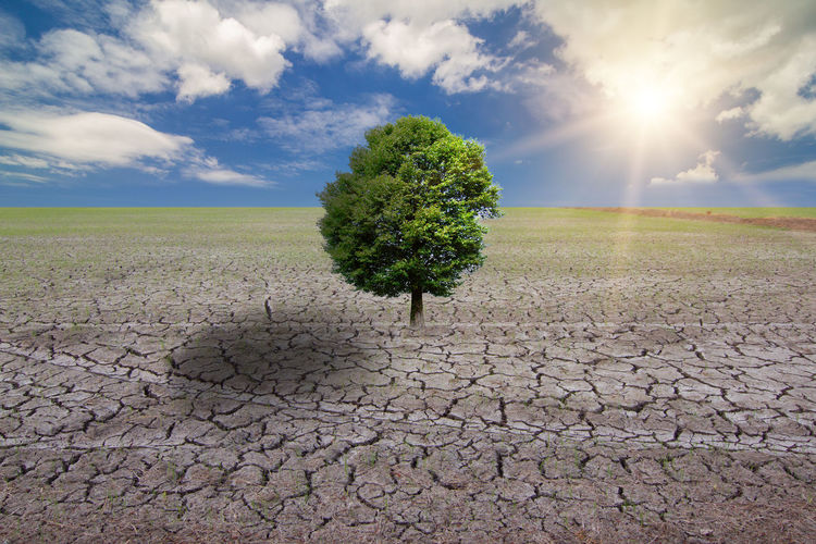 Conceptual image of green tree standing on Drought Landscape Scenics - Nature Environment Cloud - Sky Sky Field Growth Nature Land Plant Cracked Tranquility Beauty In Nature Tranquil Scene No People Dry Day Arid Climate Sunlight Barren Climate Outdoors