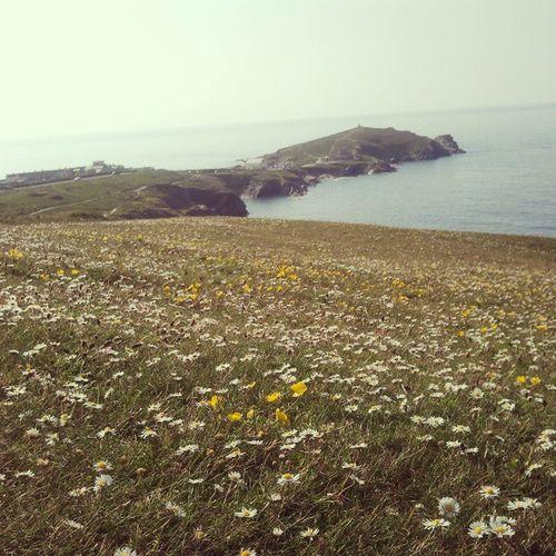 Field of daisys Daisys Headland Chilling Longwalk newquaynatureseacalmbeautifulcornwall