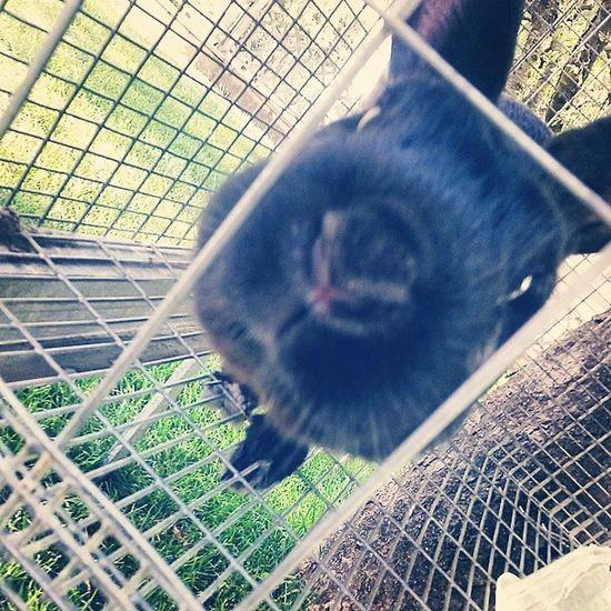 Jack Coniglio Bunny  Muso nerocarinoooofunny