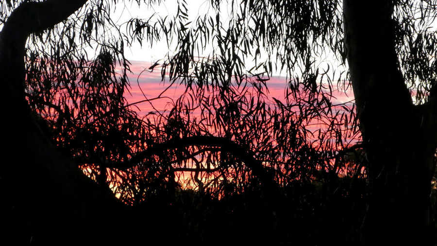 Silhouette trees against sky at sunset