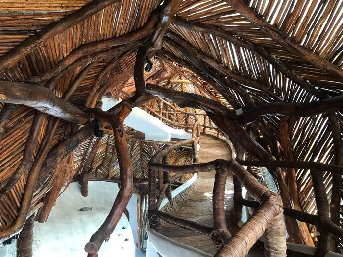 No People Architecture Built Structure Wood - Material Low Angle View Day Tree Creativity Sunlight Art And Craft Plant Thatched Roof Nature Roof Indoors  Pattern Architectural Feature Metal Palm Tree Ceiling