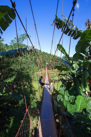 Welcome to the jungle. ASIA Wanderlust Ropebridge Backpacking Banana Tree Bananatree Holiday Jungle Landscape Nature Nature Palmtrees Philippines Plant Bridge Sabang Sky Travel Destinations Travel Photography Travelling Tree Vacation Wild Wildlife Wildlife & Nature