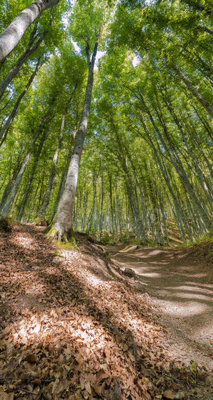 Forest near to San Fele, Basilicata, Italy. Beauty In Nature Day Environment Forest Green Color Growth Land Landscape Nature No People Non-urban Scene Outdoors Plant Remote San Fele Scenics - Nature Sunlight Tranquil Scene Tranquility Tree WoodLand