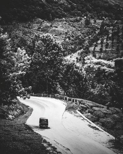 High Angle View Road No People Day Outdoors Nature Photography Wanderlust Canonphotography Monochrome Landscape Teaestate TukTuk Rikshaw Blackandwhite Eyem Nature Lovers  EyeEm Best Shots The Week On EyeEm
