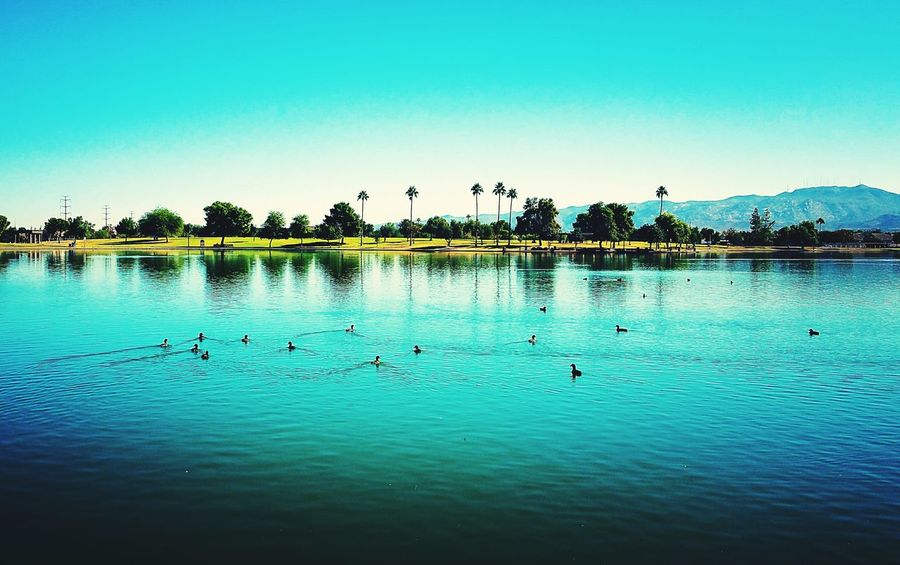 Lake View Ducks Park Group Of Ducks Nature Outdoors Landscape Traveling Home For The Holidays Finding New Frontiers Clear Sky Phoenix, AZ Chavez Park Full Frame Scenery Cloud - Sky Beauty In Nature Lakeside Lakeviewpark Backgrounds Adventure EyeEmNewHere