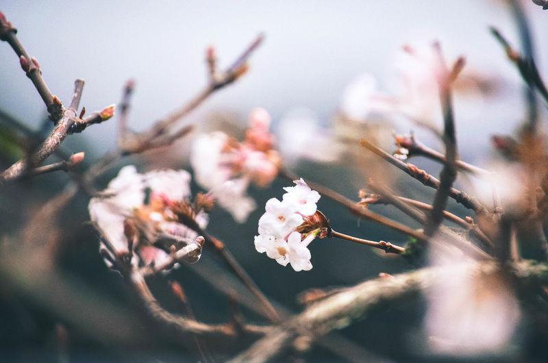 florals Flower