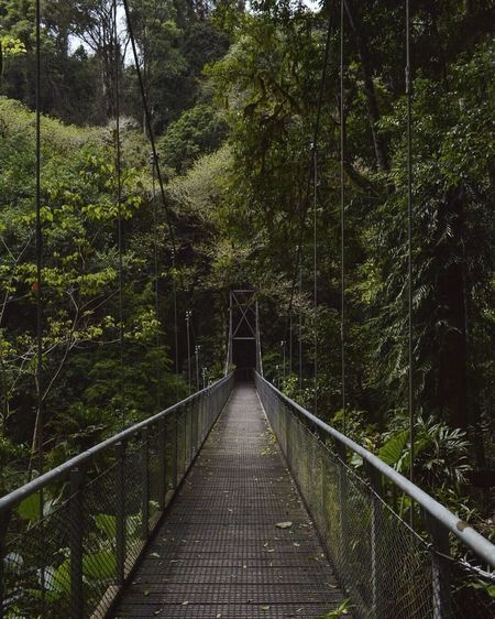 Walking through the rainforest at Dorrigo National park. Tree Forest Nature Footbridge Bridge - Man Made Structure Tranquility Outdoors Connection No People Beauty In Nature Day Tree Area Travel EyeEm Best Shots - Nature EyeEmNewHere Nature Scenics