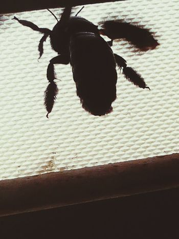 Please let me go out side 😜😜 Taking Photos Check This Out Bug Bugslife Black Bee Black Bees Black Beetles