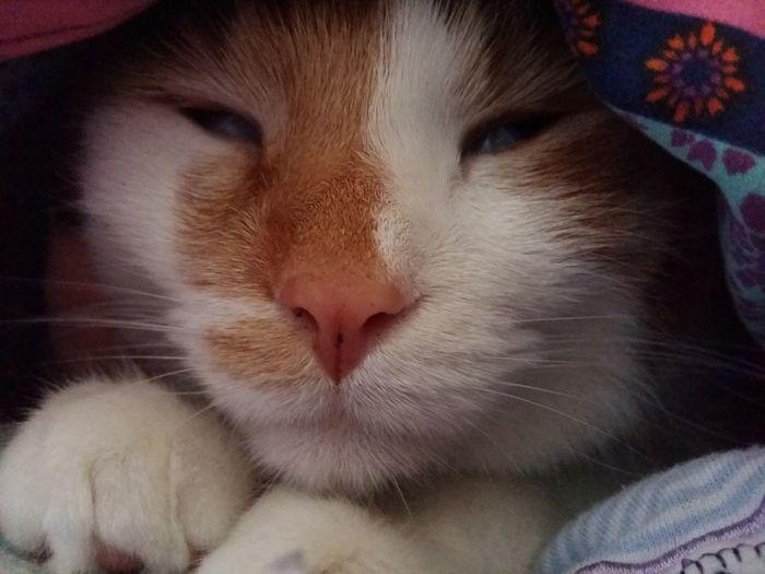 Babycats Meine Katzen Katzen<3 Babycat ❤ Cat Katzenliebe Katzen Katzenfoto Playing With The Animals Animals Cute Pets Katzen 💜 Babycat🐱