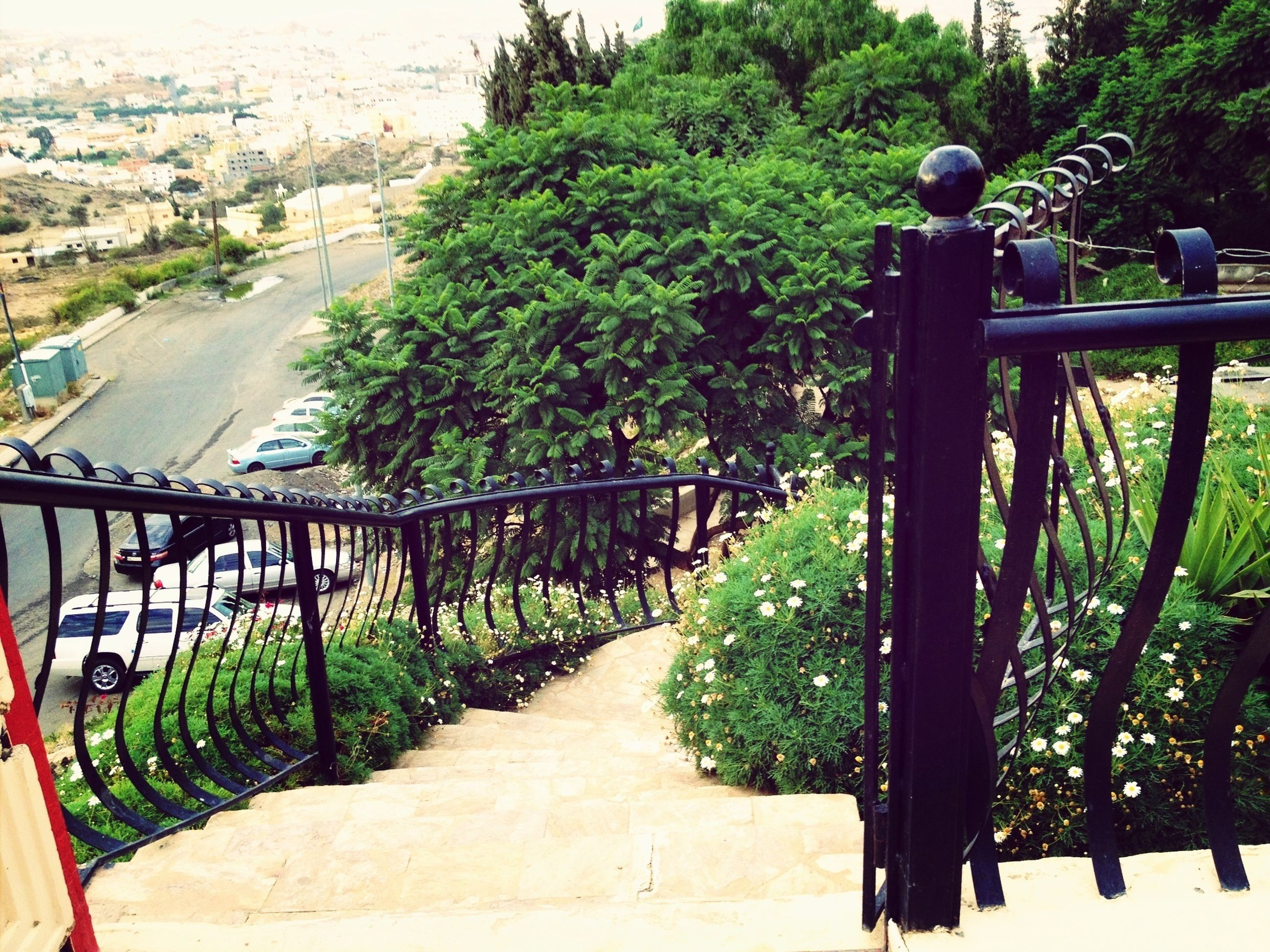 tree, railing, green color, growth, plant, built structure, the way forward, high angle view, incidental people, park - man made space, architecture, footpath, nature, formal garden, day, outdoors, sunlight, footbridge, building exterior, bridge - man made structure