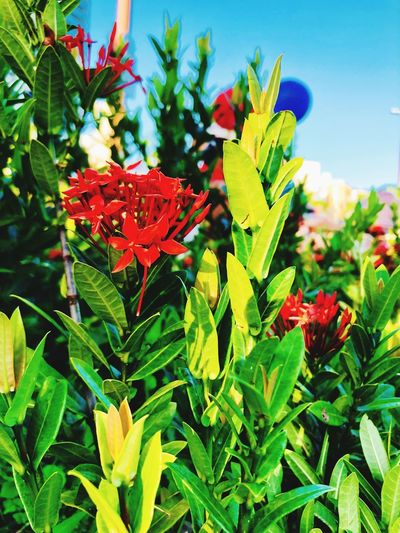 Plant Growth Plant Part Leaf Beauty In Nature Flowering Plant Flower